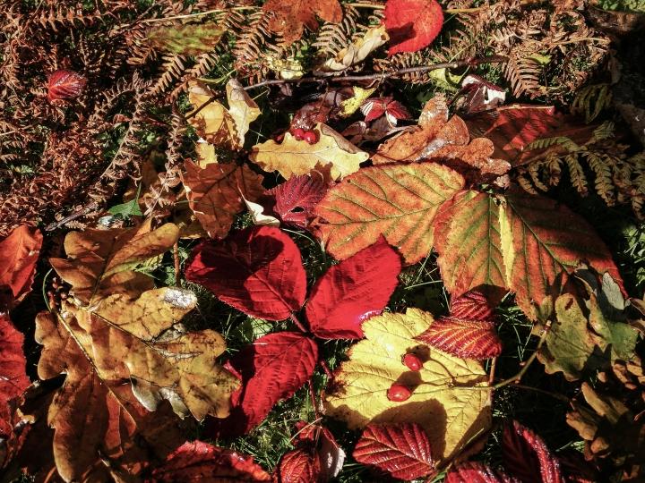 Autumn (1 of 1).jpg