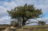My favourite tree, Ayrshire